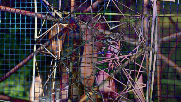Kecskés Péter: Caged 1, 2017
