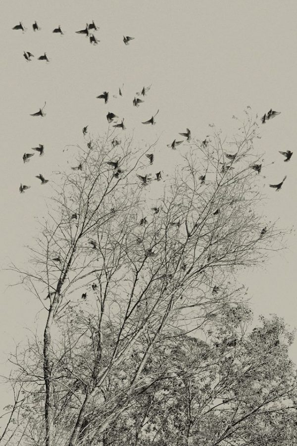 Sasa Gyökér: Birds